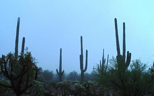 A rare foggy day - another side of the Sonoran Desert