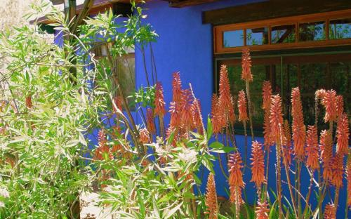 "Aloe in the courtyard and our ""blue wall"""